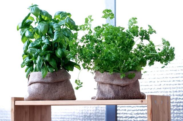 Kruidenplantjes