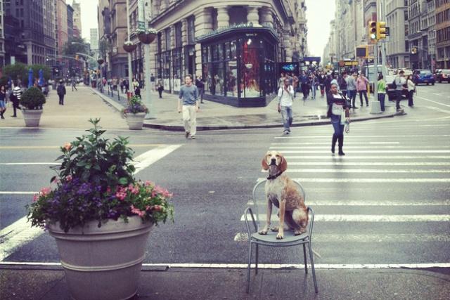 leuke hond, grappige hond, grappige hond foto's