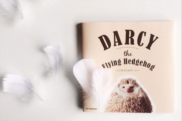 Darcy, de vliegende egel