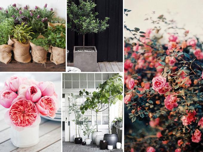Wooninspiratie: de tuin
