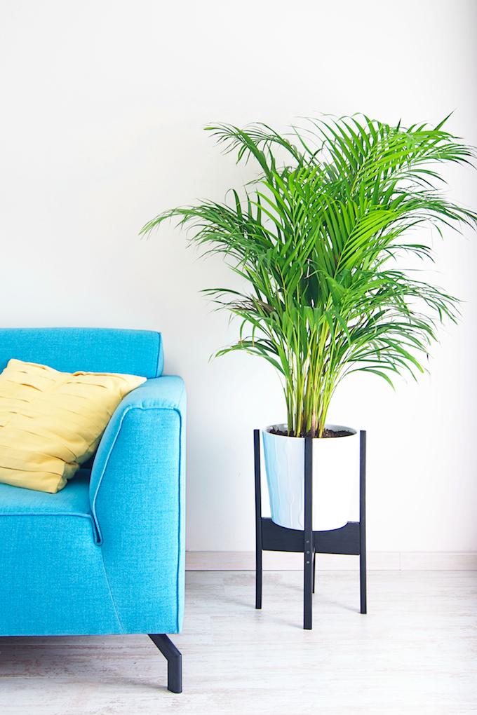 Maak je eigen plantenstand