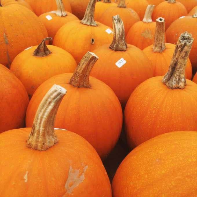 Snapshots oktober #2