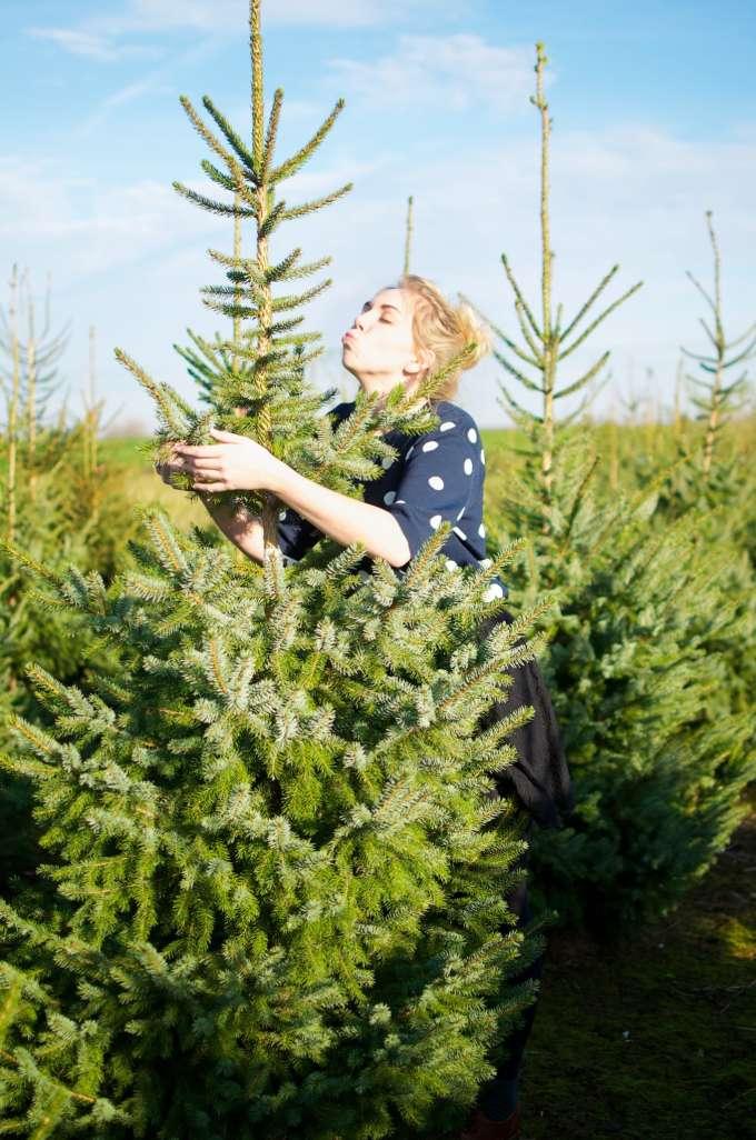 hoe kies je kerstboom uit, kerstboom uitkiezen, kerstboom kopen, kerstboom waar op letten, waar kerstboom kopen, waar goedkope kerstboom,