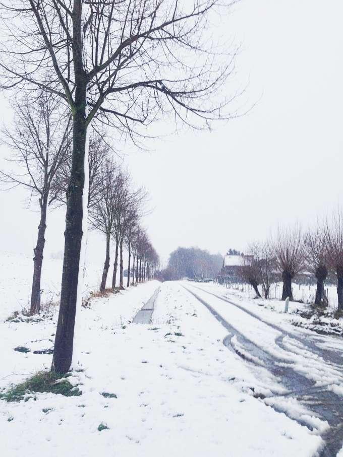 snapshots december #5