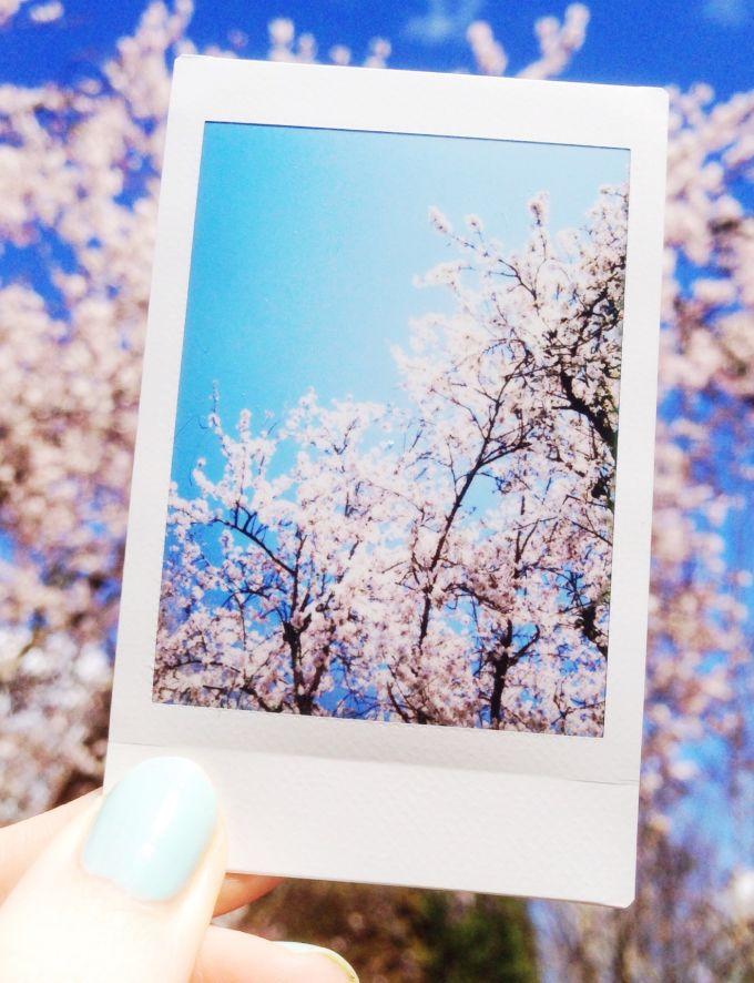 snapshots april