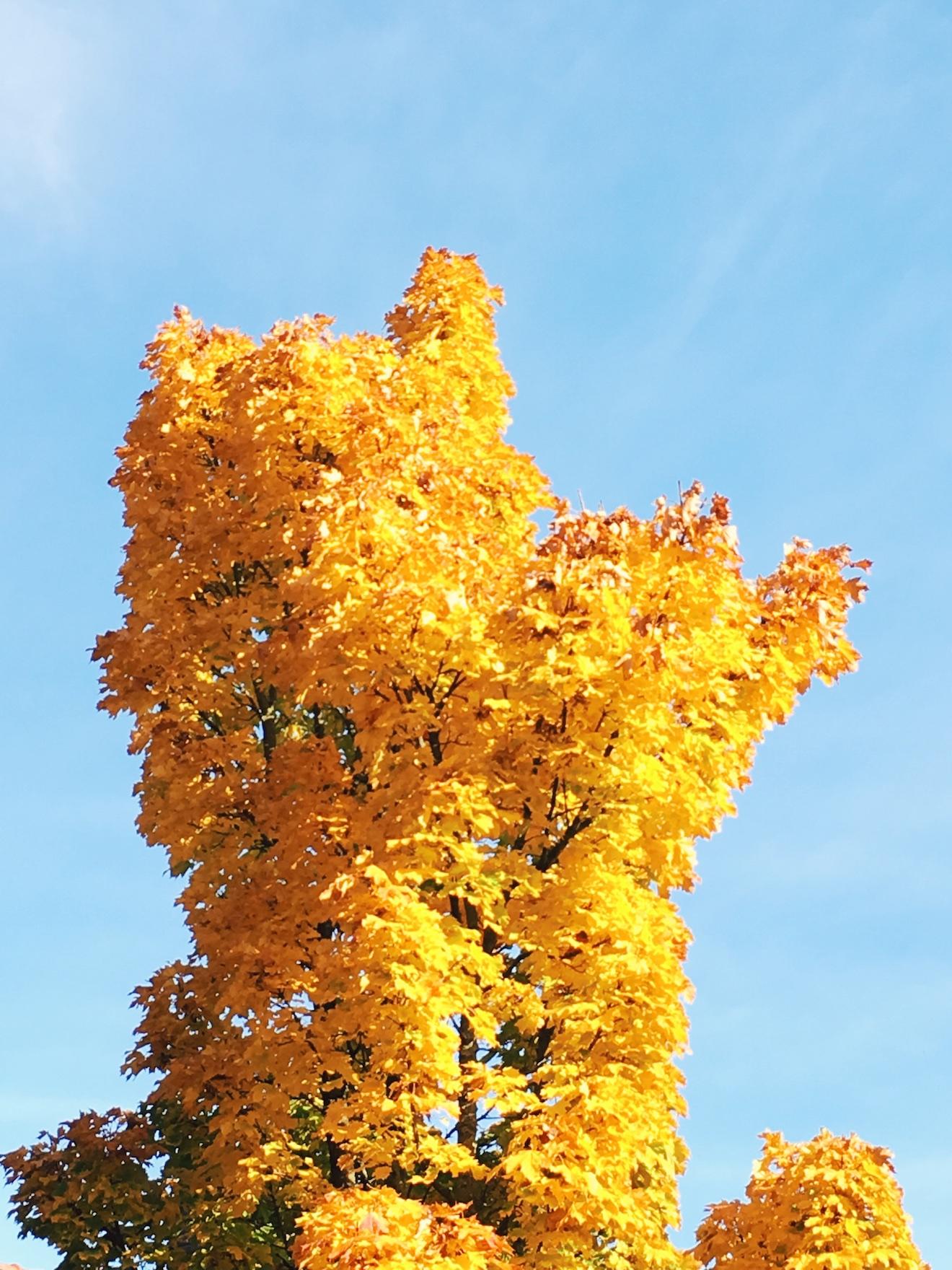 herfstkleuren bos