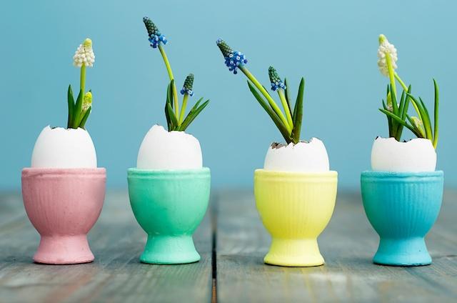 bloembol eieren