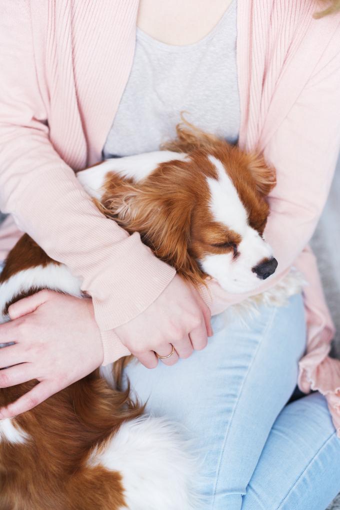 dit leerde ik van een hond opvoeden (3)