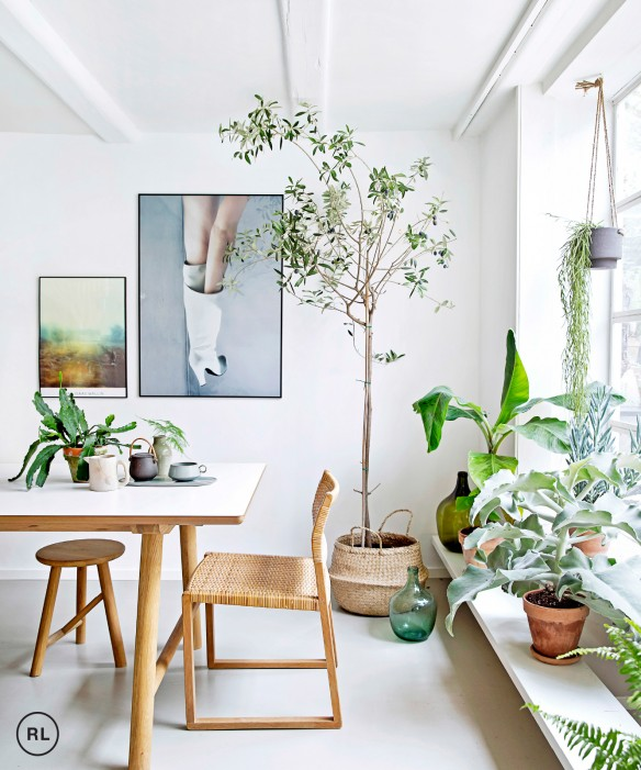 Planten in interieur