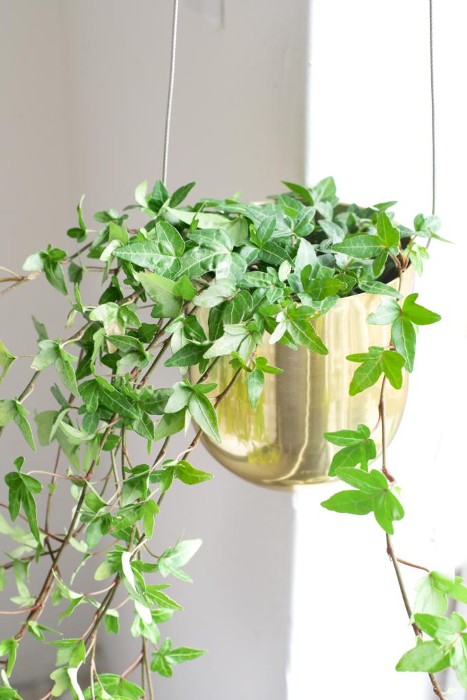 Plantenhanger zelf maken
