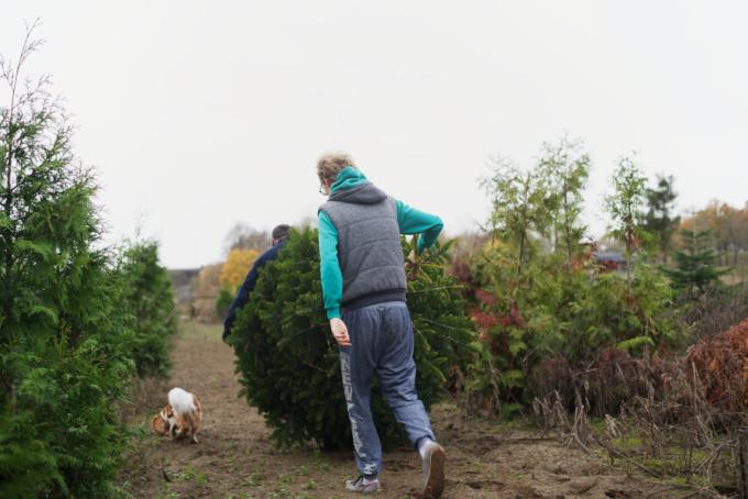 kerstboom-kopen-op-een-kerstbomenboerderij-5
