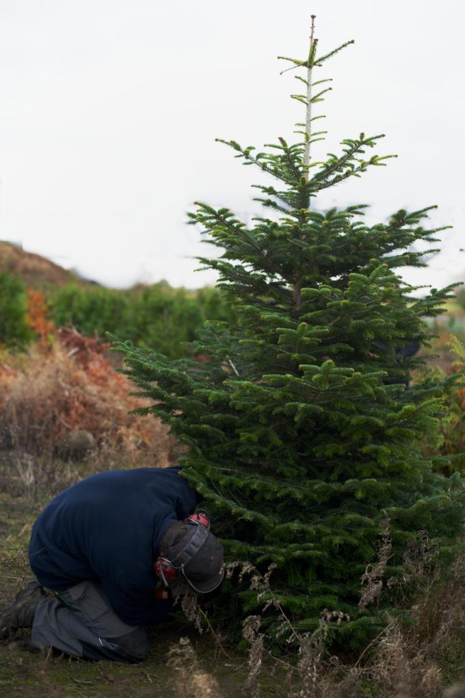 kerstboom-kopen-op-een-kerstbomenboerderij-6