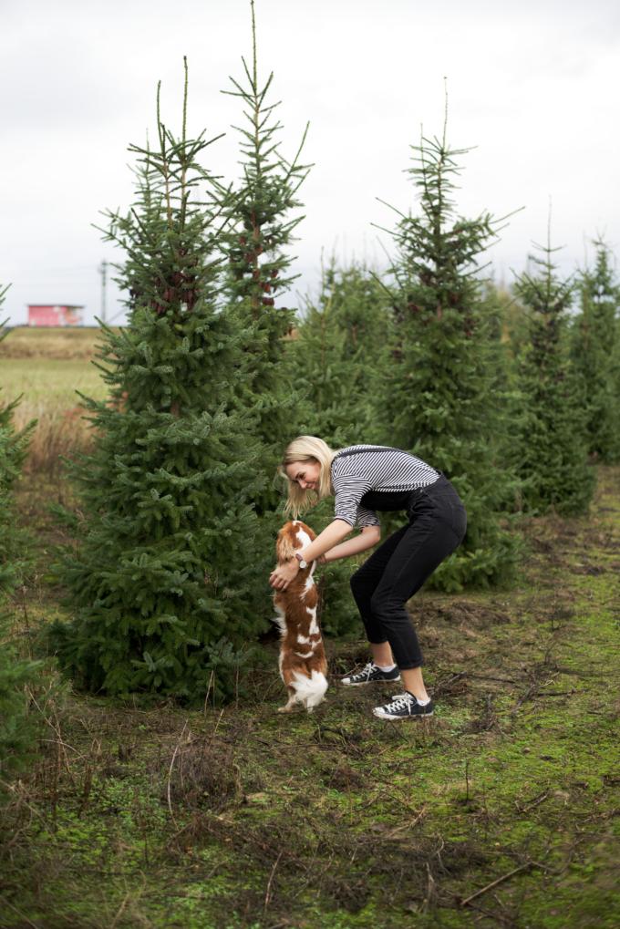 kerstboom-kopen-op-een-kerstbomenboerderij-7