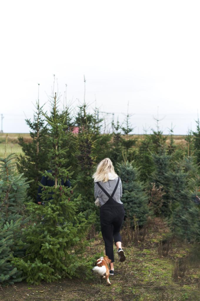 kerstboom-kopen-op-een-kerstbomenboerderij-9