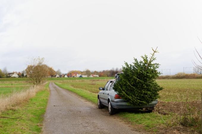 kerstboom-kopen-op-een-kerstbomenboerderij