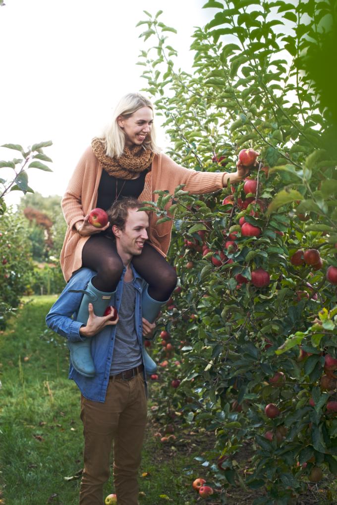 Date: appels plukken
