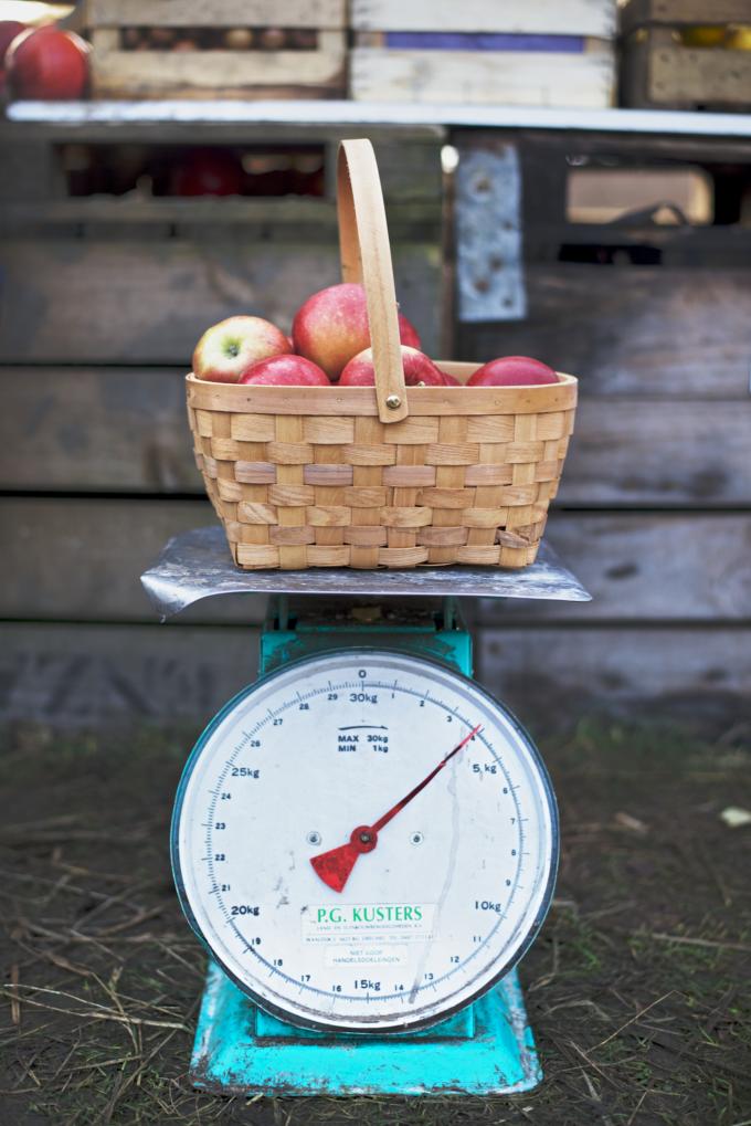 Appels plukken zaltbommel