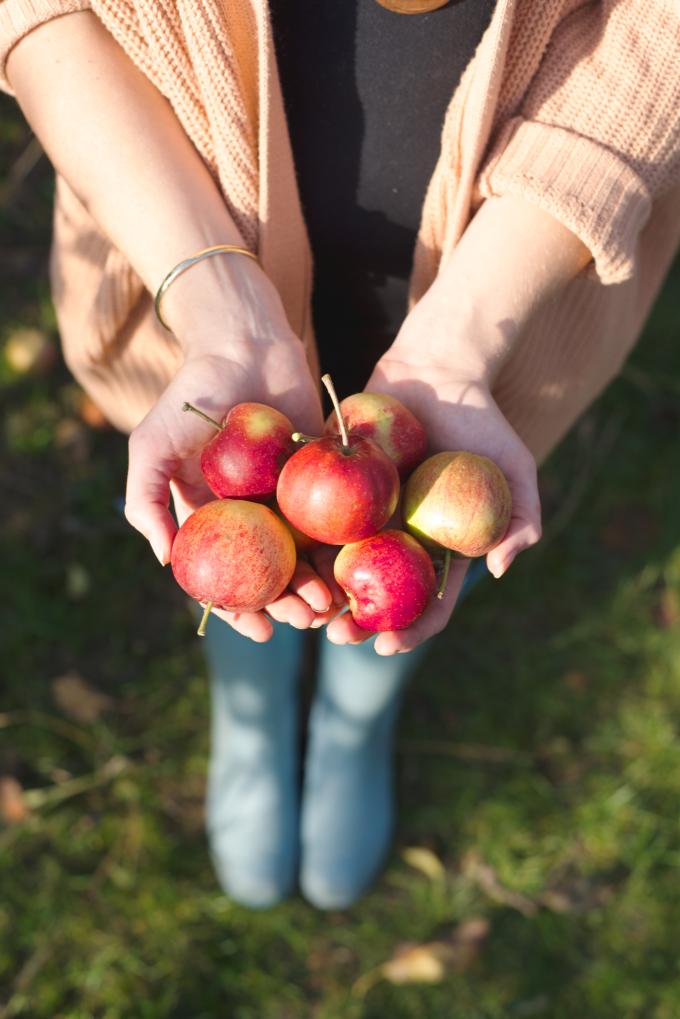 appels-plukken-6