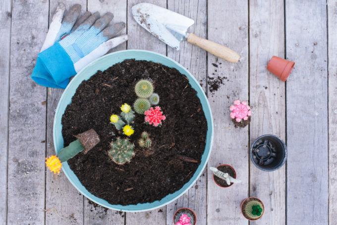 zo maak je een vetplantjes en cactussen tuin