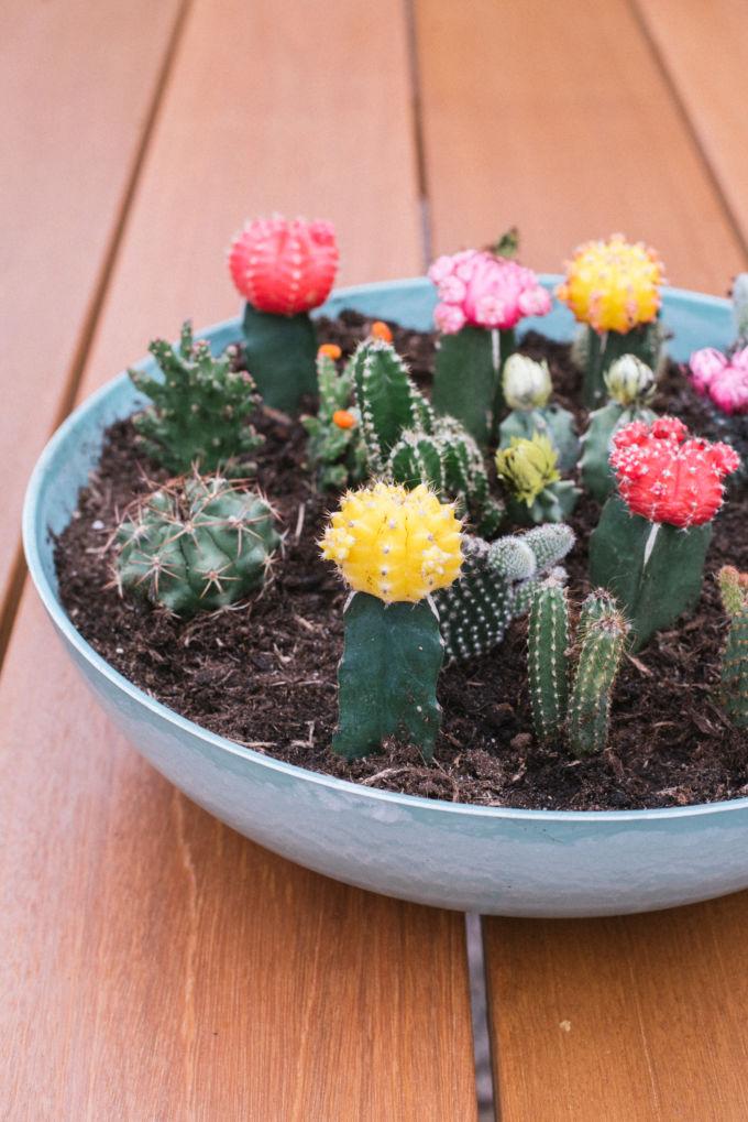 zo maak je een vetplantjes en cactussen tuin (1)-2