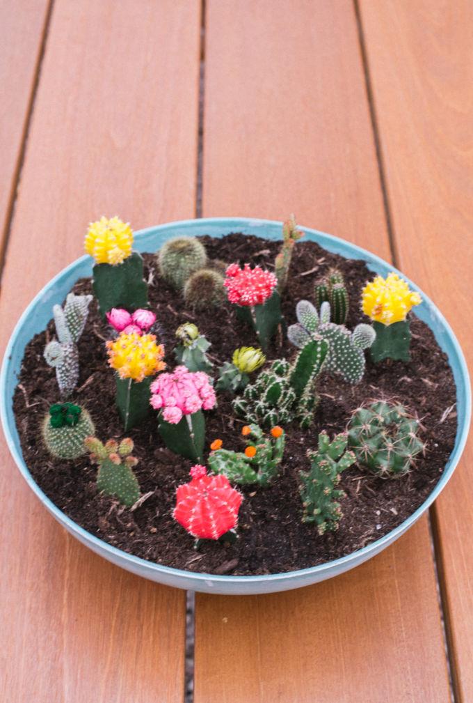 zo maak je een vetplantjes en cactussen tuin (2)-2