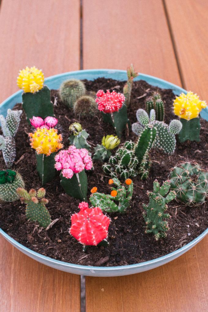 zo maak je een vetplantjes en cactussen tuin (3)-2