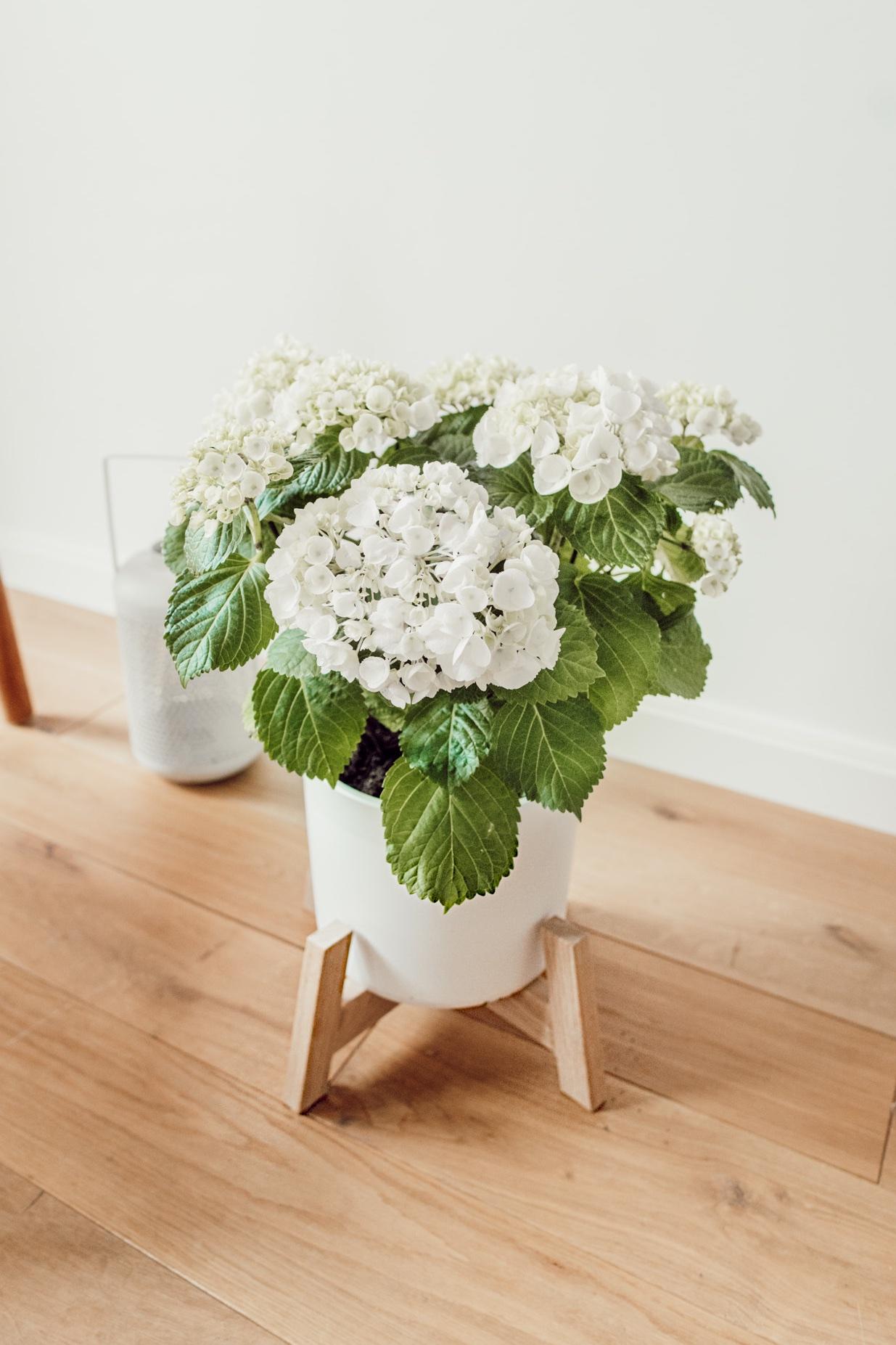 DIY plantenstandaard hortensia bloem stylen